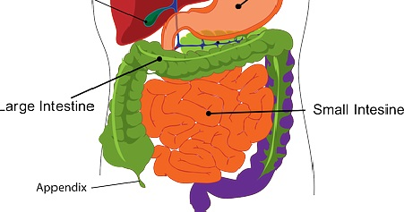 What causes an infection in the intestines?