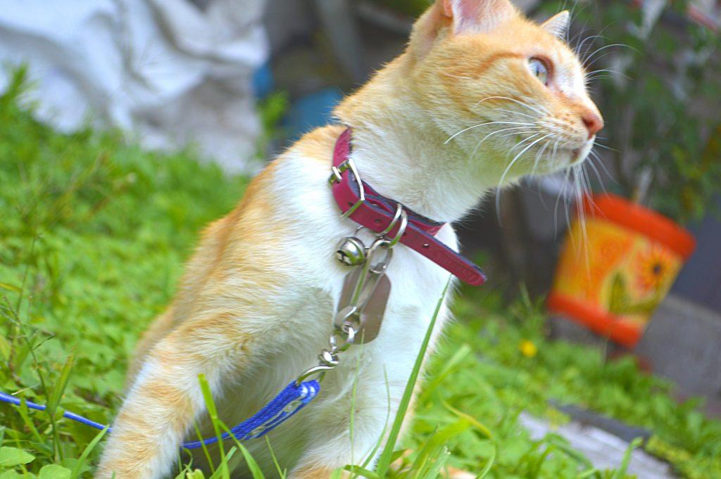 Cat bite wound abscess treatment