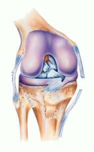 Does Partial Acl Tear Heal Its Own