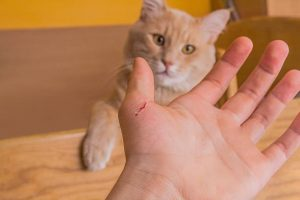 What To Do If A Cat Scratches You